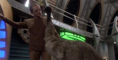 If wishes were emus...