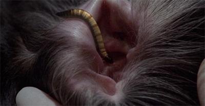 Ear, ear!