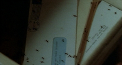 Fun fact: these ants actually auditioned for The List, but Carter liked them so much he cast them in The Walk.