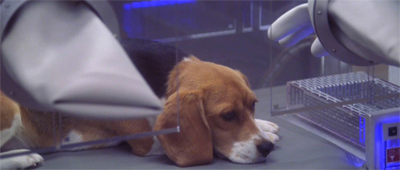 This makes Porthos a sad beagle...
