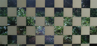 Checkered vision...
